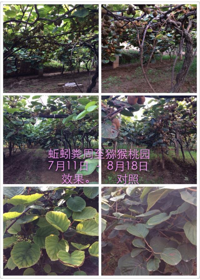 http://www.zhuwensan.cn/dayingtao/猕猴桃.jpg