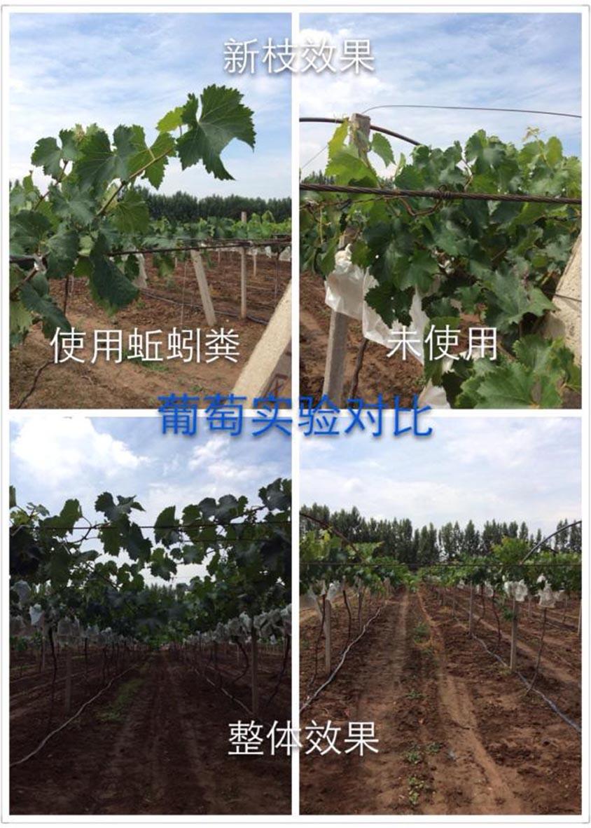 http://www.zhuwensan.cn/dayingtao/葡萄-0.jpg