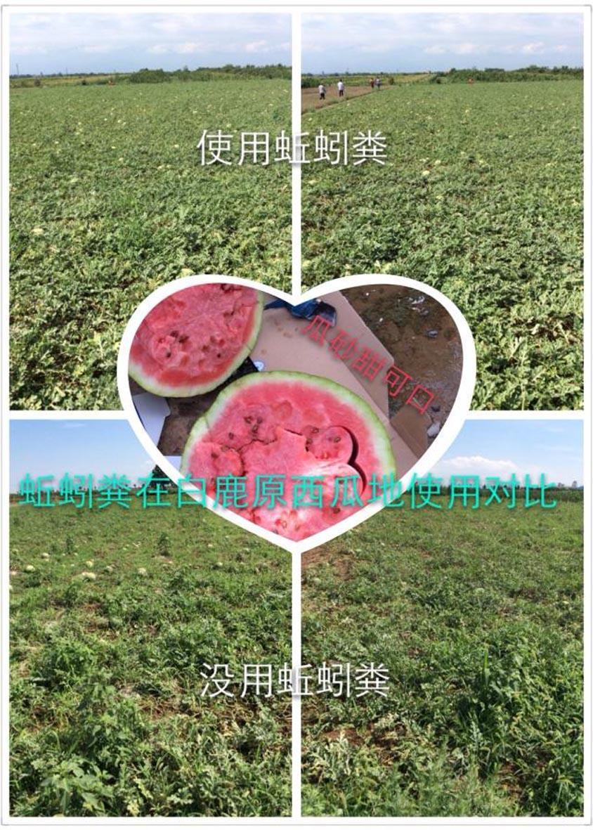 http://www.zhuwensan.cn/dayingtao/西瓜.jpg