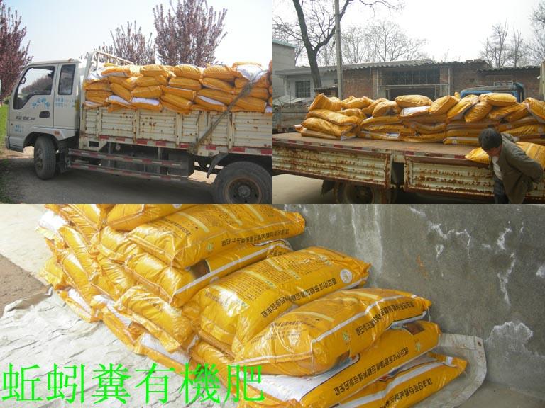 http://www.zhuwensan.cn/dayingtao/qiuyinfei.jpg